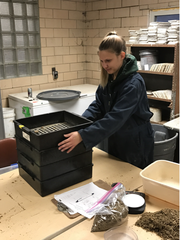 University of Illinois student performing the Penn State Shaker Box test on a TMR sample.